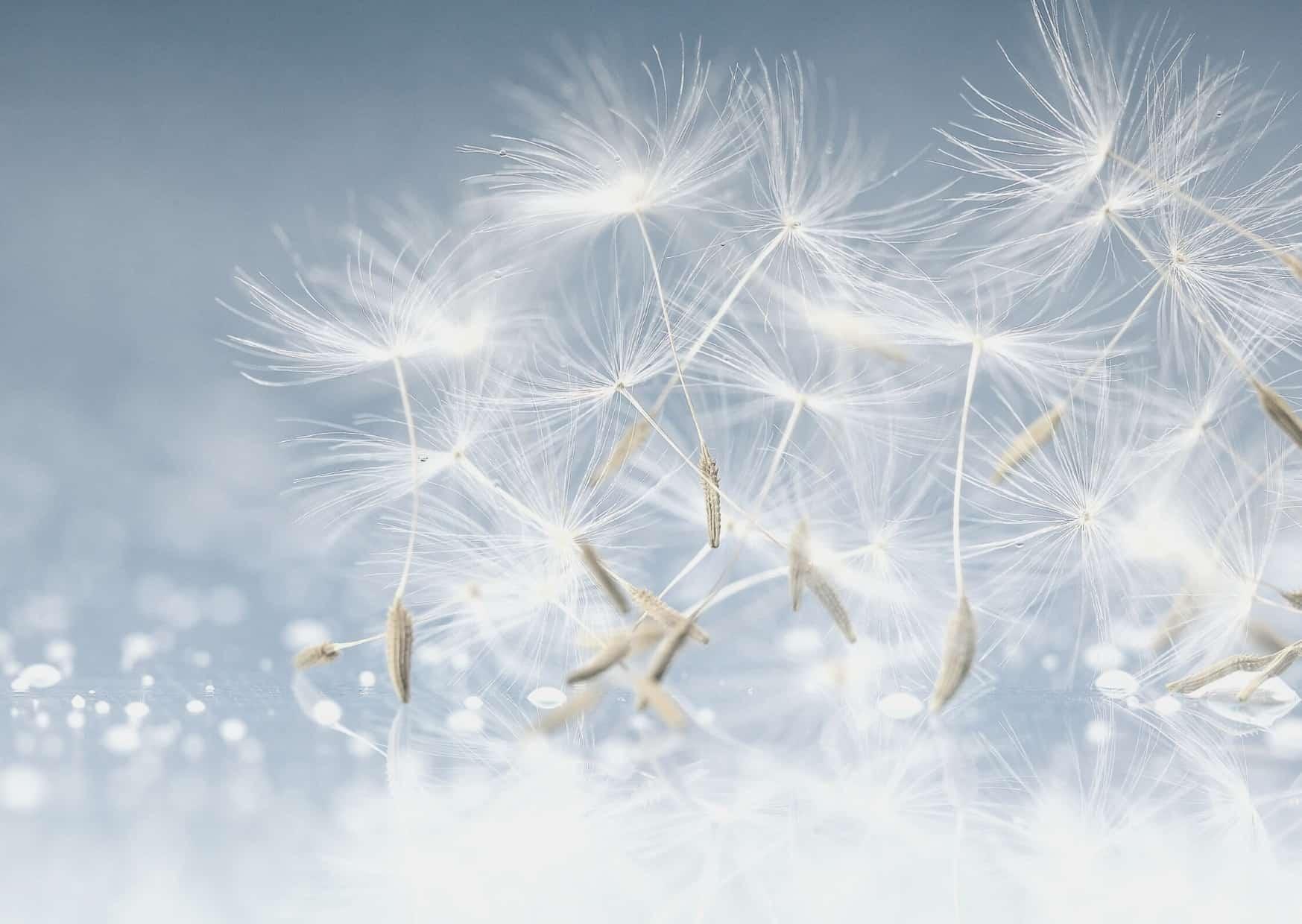 Z wdzięcznością zatrzymuję się aby życzyć Wam szczęśliwego serca ipozytywnego umysłu w2020 roku 8 1 - WYKONAJ TEST Mindsonar®